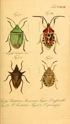 Die wanzenartigen Insecten plates 5-9  Nürnberg :In der C.H. Zeh'schen Buchhandlung,1831-1853.  Biodiversitylibrary. Biodivlibrary. BHL. Biodiversity Heritage Library