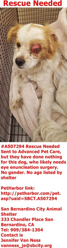 SAFE by The Pet Rescue Center --- #A507294 Rescue Needed,  likely needs eye enuncleation surgery. No gender. No age listed by shelter  PetHarbor link: http://petharbor.com/pet.asp?uaid=SBCT.A507294  San Bernardino City Animal Shelter  333 Chandler Place San Bernardino, CA Tel: 909/384-1304 Contact is Jennifer Van Ness vanness_je@sbcity.org  https://www.facebook.com/photo.php?fbid=10211613324866268&set=a.10211449832339057.1073742076.1160364024&type=3&theater
