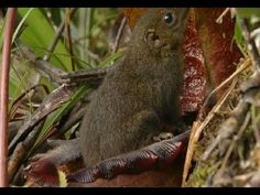 """Incredible """"Toilet"""" plant - Attenborough 60 Years in the wild - BBC"""