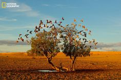 Strezlecki Desert, Australia