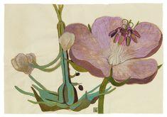Sarah Graham, artist, botanical works on paper, 2008 to present. Botanical Drawings, Botanical Art, Botanical Illustration, Illustration Art, Illustrations, Collage Drawing, Painting & Drawing, Sarah Graham Artist, Wildflower Drawing