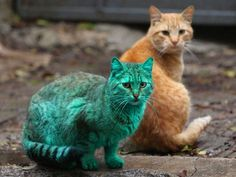 This Cat Accidentally Turned Himself green 4