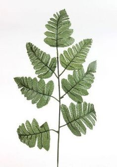 Liść paproci - 34 cm