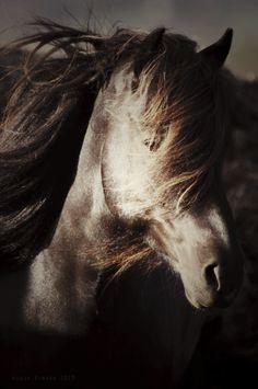 Horses/paarden