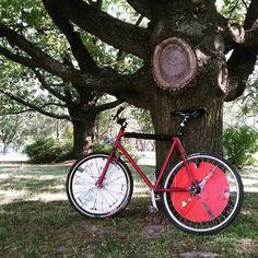 #bike #bikelife #bikepolo #rower #kumakumie #lublin