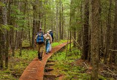 Hikers follow the North Country Trail through a black spruce tamarack bog. One of the trail's Minnesota legs tours the Tamarac National Wildlife Refuge.