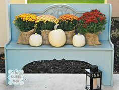 Decorating With Mums - Mums have to be the quintessential flower to use in fall decorating and garden centers have already been stocking them.