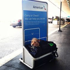 With heartbreaking stories of pets dying during airline travel filling the headlines, you may wonder if this mode of transport is safe for your furry friends. Kitty Block, CEO of the Humane Society of the United States, says flying with dogs … Airline Travel, Dog Travel, Flying Dog, Pet Gear, Cute Baby Cats, Mode Of Transport, Humane Society, Funny Cats, Dogs And Puppies
