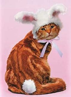 love this! 13 Reasons Cats Hate Easter - Cat Lifestyle: Mousebreath Magazine