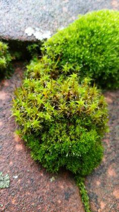 Terren Springbrunnen | Die 27 Besten Bilder Von Moos Moss Garden Nature Und Gardens