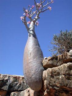 Natura, Yemen