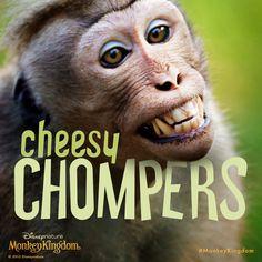Smile! It's Dentist's Day. #DentistsDay #MonkeyKingdom