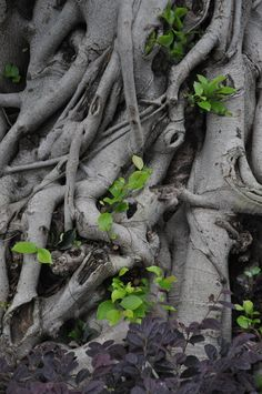 Tree Roots School Murals, Root System, Tree Roots, Tree Forest, Tree Bark, Photo Tree, Growing Tree, Oak Tree, Great Friends