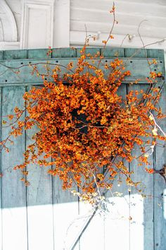 ~Autumn~ Warm Welcomes in Bittersweet Wreaths Bittersweet Vine, Pumpkin Colors, Autumn Decorating, Deco Floral, Diy Décoration, Fall Wreaths, Floral Wreaths, Fall Harvest, Blue Harvest
