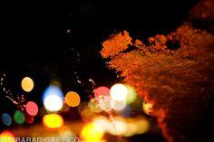 Barbara Di Cretico Photography | NYC