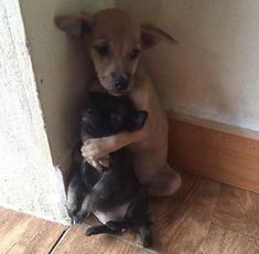 路上に捨てられていた2匹の子犬。子犬が更に小さな子犬をギュっと抱きしめ守っていた(ベトナム)