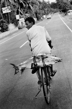 Fish on bicycle