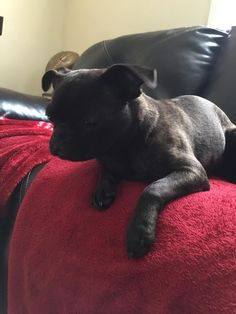 Just added this beautiful little girl to my family. http://ift.tt/2kY2t1g