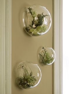 Set of 3 Wall Bubble Terrariums Indoor Plants Holders Wall Glass Vase for Flowers Wall Mounted Planters for Succulents Air Plants Wall Decoration for Sunroom Living Room Indoor Plant Wall, Indoor Flowering Plants, Air Plants, Indoor Garden, Wall Of Plants, Nature Plants, Green Plants, Garden Pots, Garden Ideas