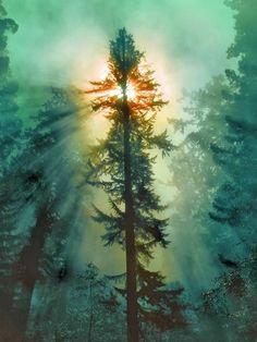 "Redwood National Park, California ~ Miks' Pics ""Trees ll"" board @ http://www.pinterest.com/msmgish/trees-ll/"