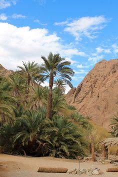 Beautiful oases in #Sinai desert