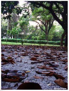 Parque Ibirapuera - SP