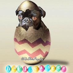 Happy Easter! Photo by @mrelvispugsley  Want to be featured on our Instagram? Tag your photos with #thepugdiary for your chance to be featured.