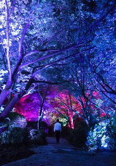 a forest where gods live: teamlab unearths digital artworks across mifuneyama rakuen park Nature Photography Tips, Forest Photography, Ocean Photography, Street Installation, Light Installation, Magical Forest, Dark Forest, Forest Sunset, Street Wall Art
