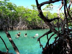 Gilligan's Island - Guánica, Puerto Rico. So many weekends of fun:)❤awesome trees to jump from....