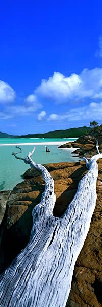 """""""Transient Beauty, Queensland. Australia"""" ...and in case you are wondering our sky can really be this blue. S"""