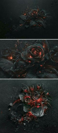 rose petals curling up and turning black as though they were in the heart of the fire. Panzer Tattoo, Art Tumblr, Gothic Art, Dark Beauty, Black Tattoos, Dark Art, Fantasy Art, Concept Art, Cool Art