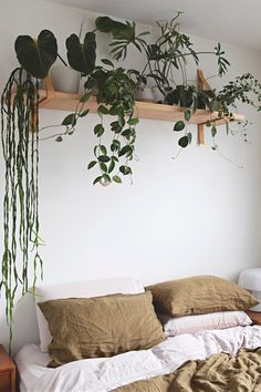 This Horticulturist's Small Melbourne Home Is as Delightfully Plant-Filled and. This Horticulturist's Small Melbourne Home Is as Delightfully Plant-Filled and Green as You'd E Bedroom Decor Cozy, Bedroom Makeover, Bedroom Design, Bedroom Plants, House Plants Decor, Bedroom Plants Decor, Bedroom Green, Room Ideas Bedroom, Industrial Decor Bedroom