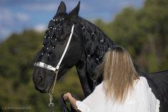 Nouveau Licol de présentation Fairy Horse à découvrir très prochainement sur la boutique en ligne http://fairyhorse.com Création Fairy Horse - Reproduction interdite COPYRIGHT© / Tous Droits Réservés.