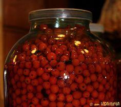Home-made ashberry liquor