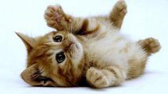 Prémios ou castigos para educar os nossos gatos?