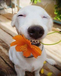 A gengivite também atinge os cães, podendo desenvolver doenças mais graves Cute Funny Dogs, Cute Funny Animals, Beautiful Dogs, Animals Beautiful, Animals And Pets, Baby Animals, Dog Nose, Smiling Dogs, Happy Dogs