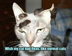 Wish my cat had fleas, like normal cats.