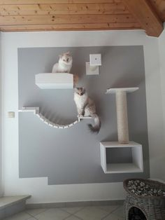 Cat Walkway, Cat Climbing Wall, Cat And Cloud, Cat Wall Furniture, Cat Castle, Cat Wall Shelves, Cat Playground, Cat Scratching Post, Cat Room