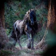 Horse, misty morning walk in the forest, breathtaking!