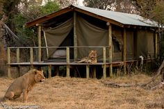 It's nice to go on safari. Tented accommodation, relaxing out on the deck and enjoying the sights and sounds of the bush :)