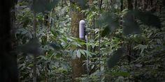 suoni delle foreste