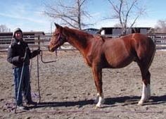 Equine Feeding Basics- Avoiding Common Mistakes Part 2 of 3 [Excess grain, especially sweet feeds]