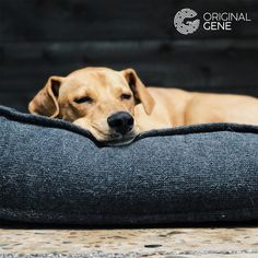 If you think your dog knows when it's time for dinner or a nap, you're right! An interesting study showed that dogs can pick up on our routines and habits and they are patiently waiting for us to come back home :) Pet Shop, Home Dna Test, Dna Facts, Womens Wellness, Best Jewelry Stores, Child Love, Genetics, Back Home, Labrador Retriever