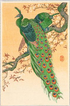 Ohara Koson: Peacock and Peahen on Branch - Early 20th Century