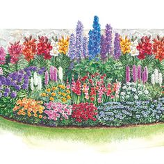 I would so love to plant this for my honeybees :-)