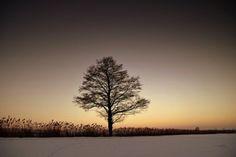 New free stock photo of snow dawn landscape