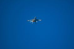 Hornet by Graziella Serra Art & Photo on