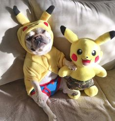 Which one is the real Pikachu? French Bulldog  in a Pokemon costume, #pokemongo #bulldogs #costume