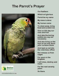Parrot Prayer #parrotpet #parrotcare