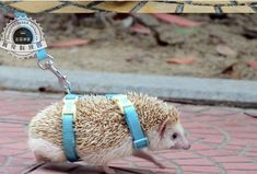 Adjustable hedgehog  Harness for Training Playing traction rope